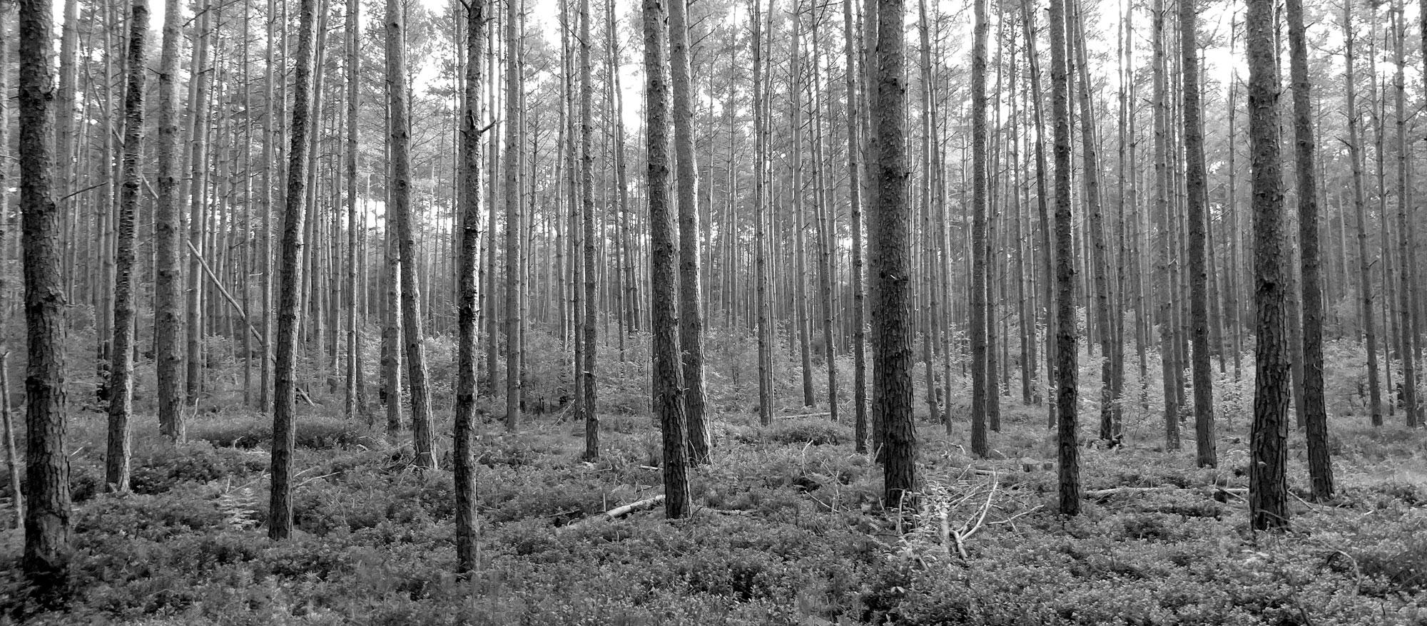 CremTec Naturfriedhof Waldfrieden